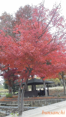 上尾丸山公園③
