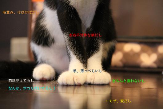 IMG_0013_Rのコピー