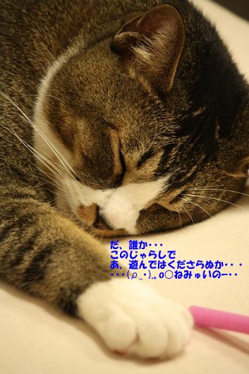 IMG_0201_Rのコピー