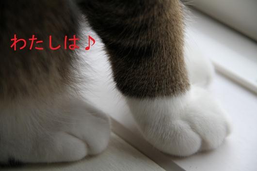 IMG_0048hのコピー_R