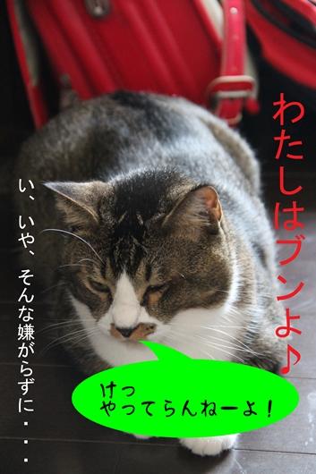 IMG_0079iのコピー_R