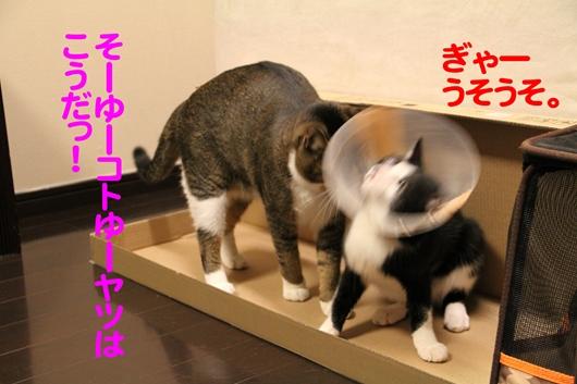 IMG_0003④誰がたぬきやねん!のコピー_R