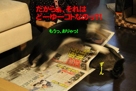 IMG_0278_Rのコピー