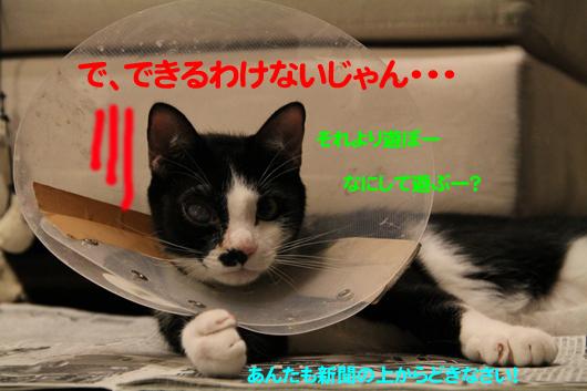 IMG_0301_Rのコピー