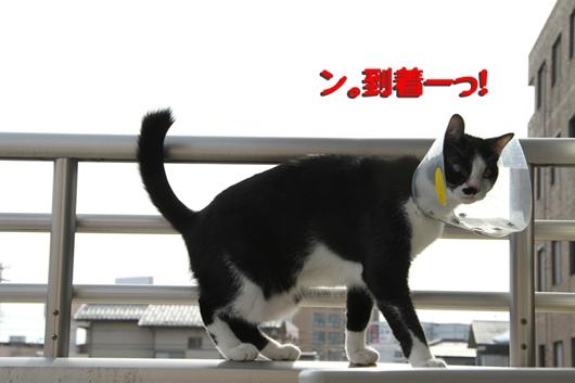 IMG_0131_R到着_R