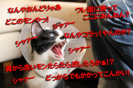 IMG_0063_Rゆ、怒る