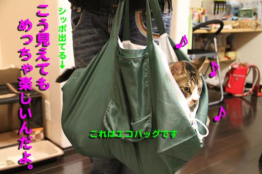 ①IMG_0293_R♪