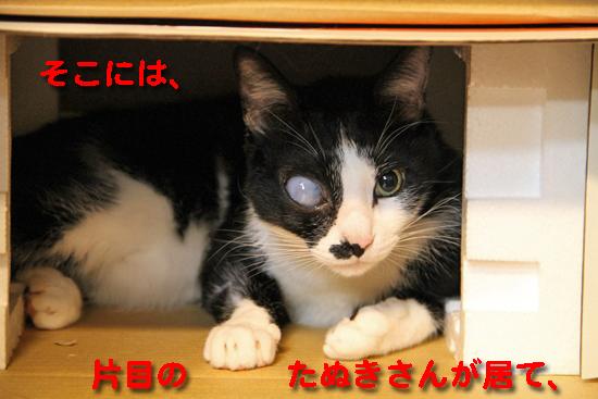 IMG_0517_R片目の   たぬきさんが居て、