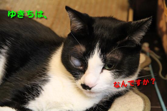 IMG_0069_Rゆきちは、なん?