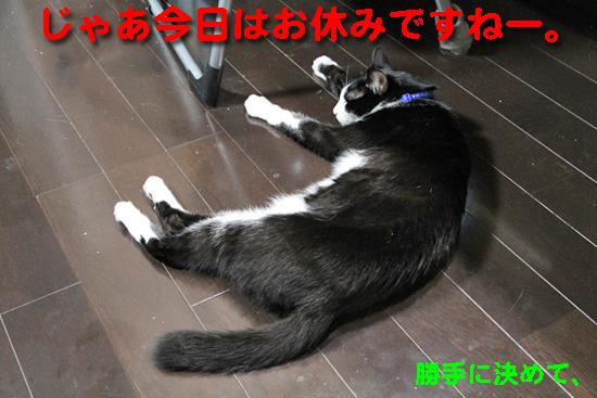 IMG_0044_Rじゃあ今日はお休みですねー。