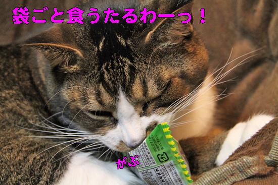 IMG_0231_R袋ごと食うたるわーっ!