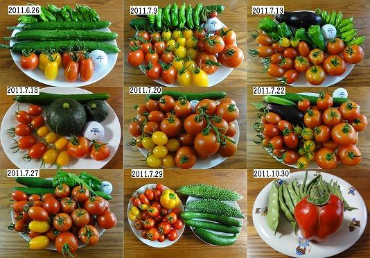 2011夏野菜収穫例