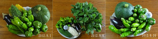 2012年9月夏野菜抜粋