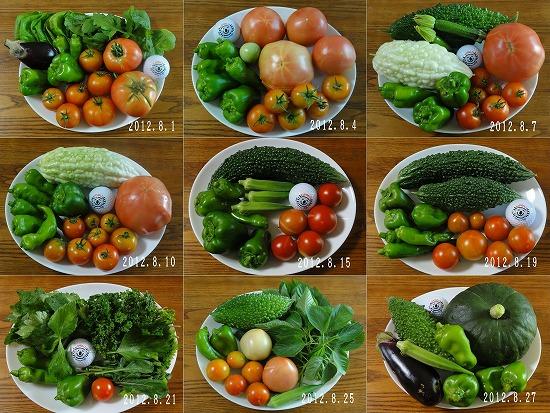 2012年8月夏野菜抜粋