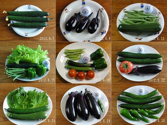 2012年6月夏野菜抜粋