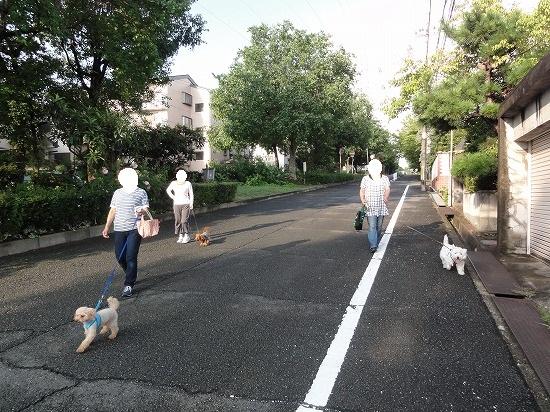 1210団体の散歩犬
