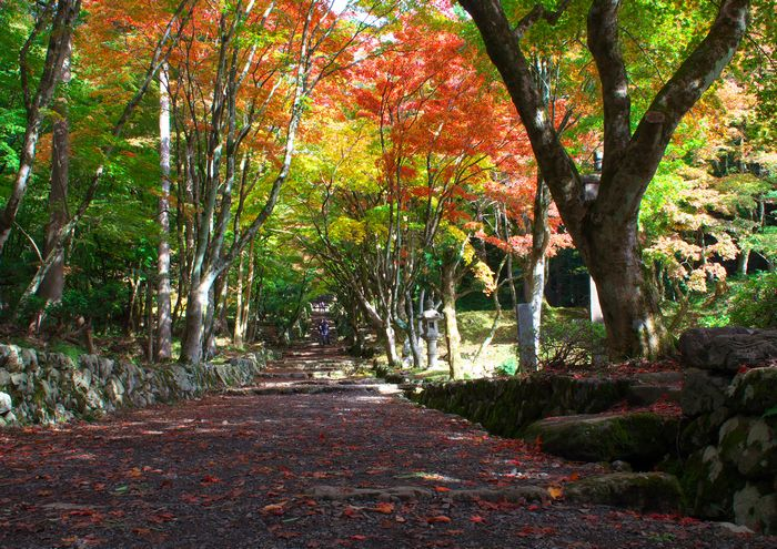 13-11-6-1鶏足寺・滋賀