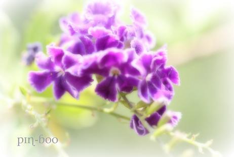 8.22花