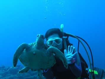アオウミガメ (7)