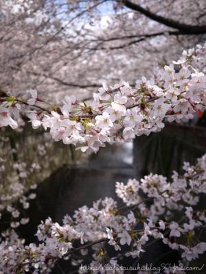 目黒川桜まつり2012