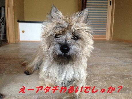 20141020悪戯3