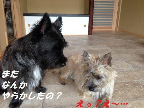20141020悪戯4