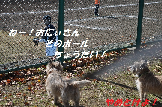 20141118キャンディ2