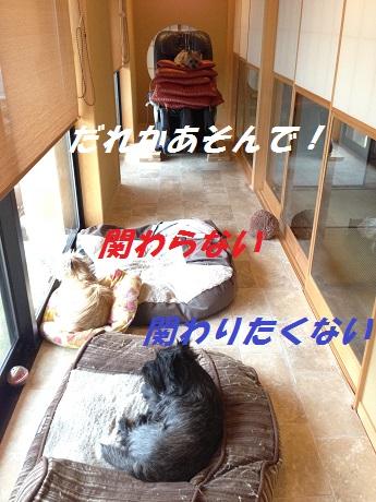 20141120キャンディ2