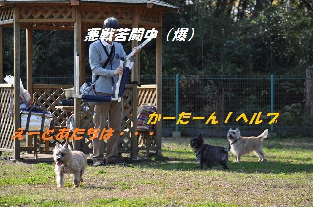 20141123(HANA).jpg