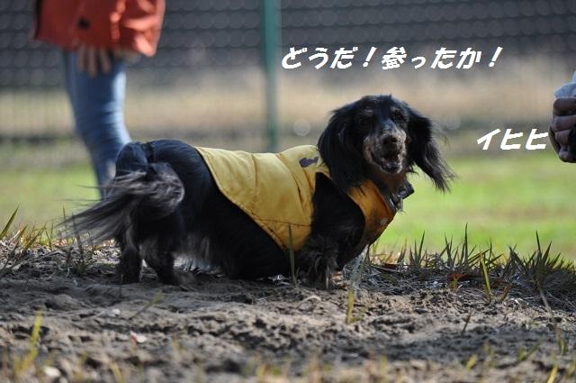 20141123しじみ4