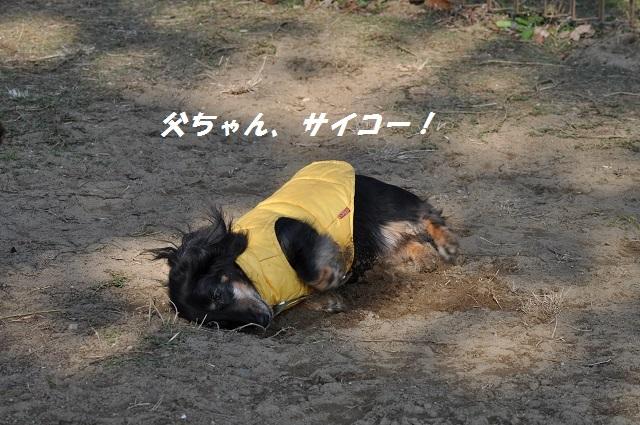 20141123しじみ3