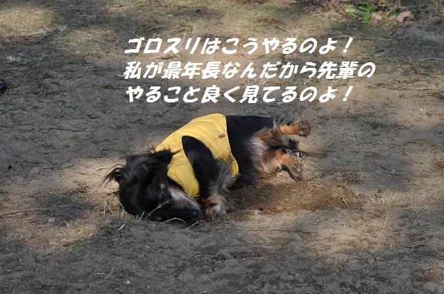 20141123しじみ2