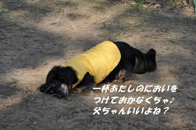 20141123しじみ1