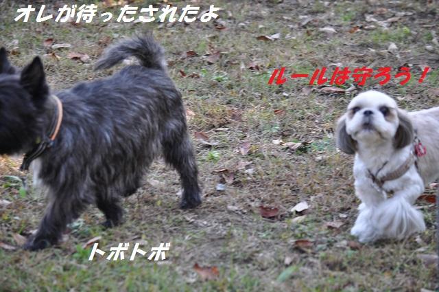 20141123たんぽぽ3 (2)