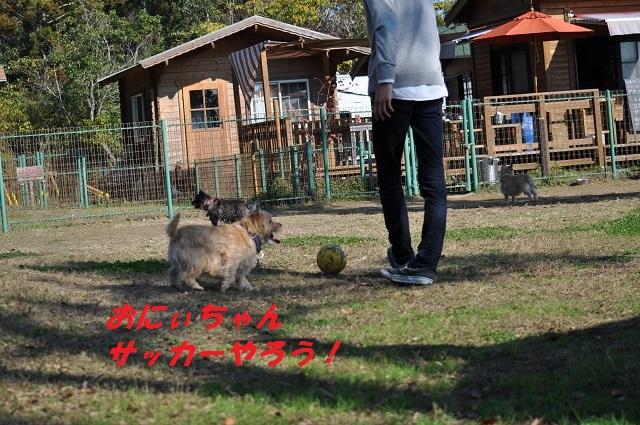 20141123HANAサッカー1