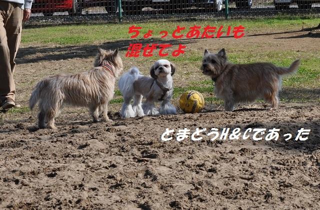 20141123HANAサッカー11
