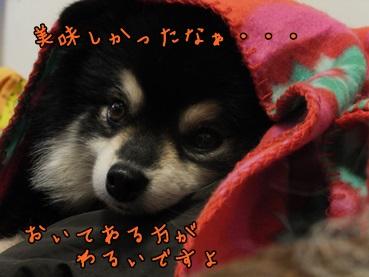 chai140119_f.jpg