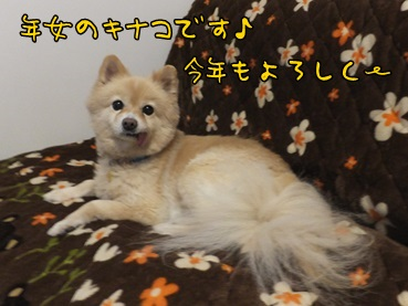 kina_140103.jpg