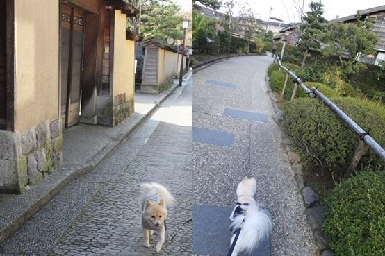 kinako131123_2-horz.jpg