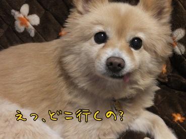 kinako140116.jpg
