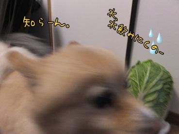 kinasai131215.jpg