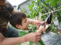 野菜収穫2