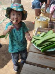葉ショウガを食べてみる