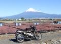 BMW R65のバックに桜えびと富士山