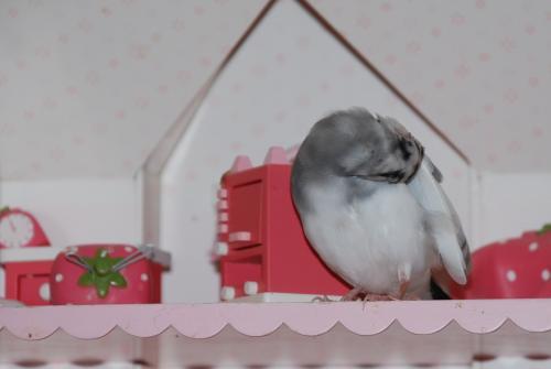 お家で羽繕い