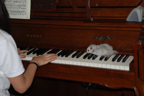 ピアノの上のBOO
