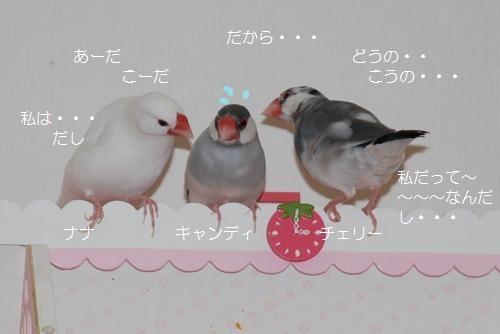 3羽の話し合い2
