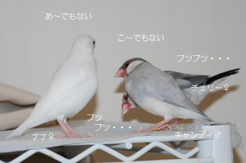 3羽の話し合い