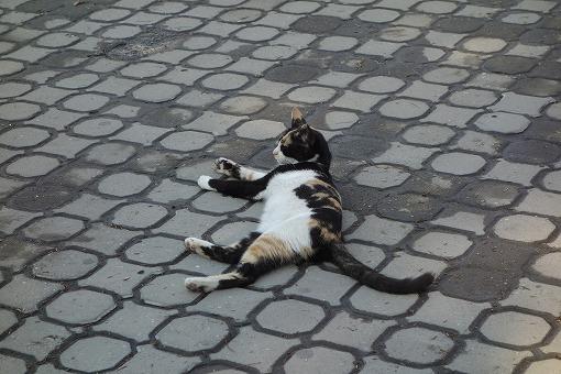 ネコもぐったり