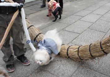 洋犬だけど⑥